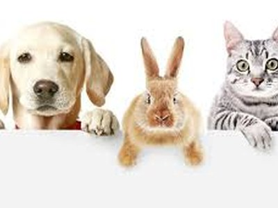 Coronavirus i Animals de companyia
