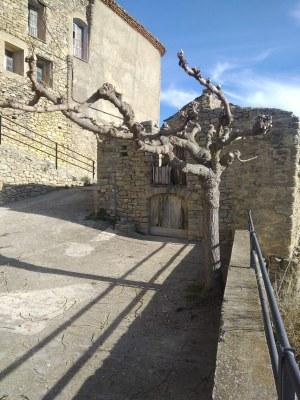 poda Castellnou.jpg